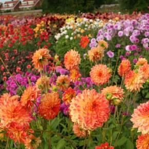 Summer Garden Planning