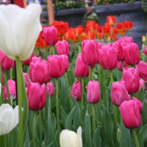 When to Plant Flower Bulbs