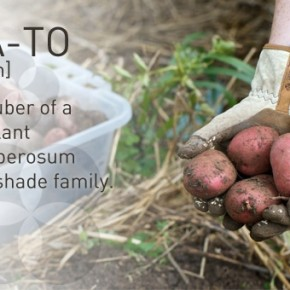Gardening with Potatoes 101 // Guest Blog