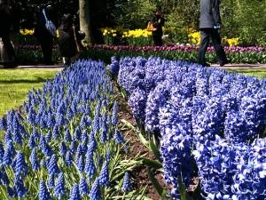 all blue garden