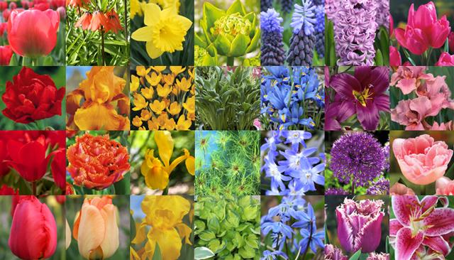 create a monochromatic garden