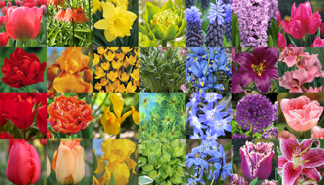 Color Color and MORE Color Garden Bulb Blog Flower Bulbs