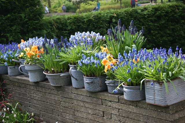 Growing Bulbs In Outdoor Containers Garden Bulb Blog