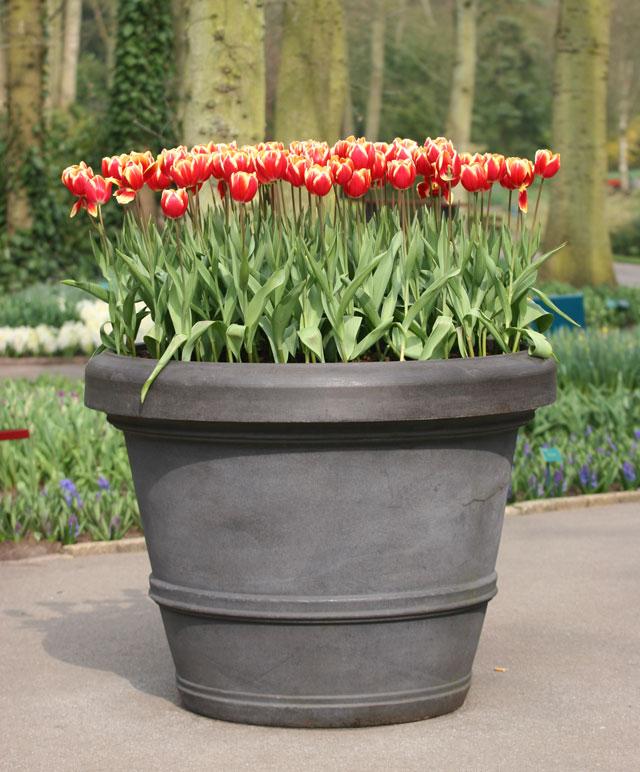 Growing Bulbs In Outdoor Containers Garden Bulb Blog Flower Bulbs