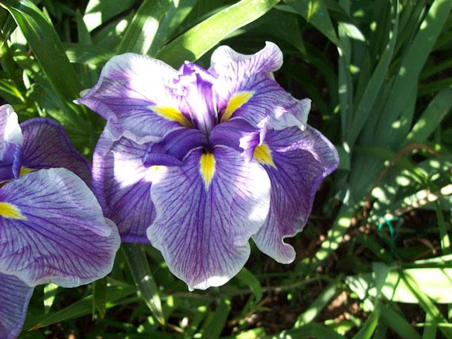 purple-flower-Geralyn-Rogers-07-30-2012