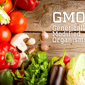 What do you know about GMOs?