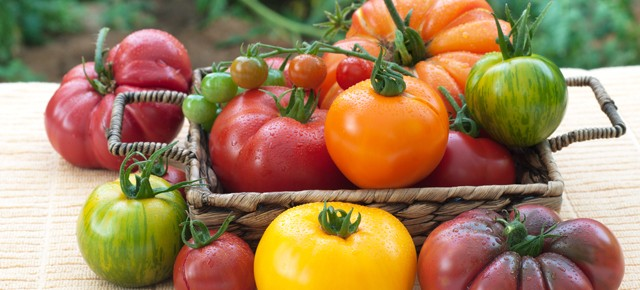 Heirloom Tomatoes -- All the Rage or Just a lot of Hype?