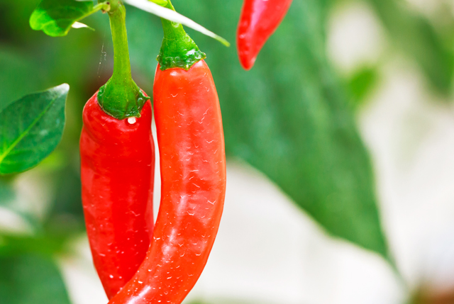 shutterstock_99468644-Red-hot-chili-peppers