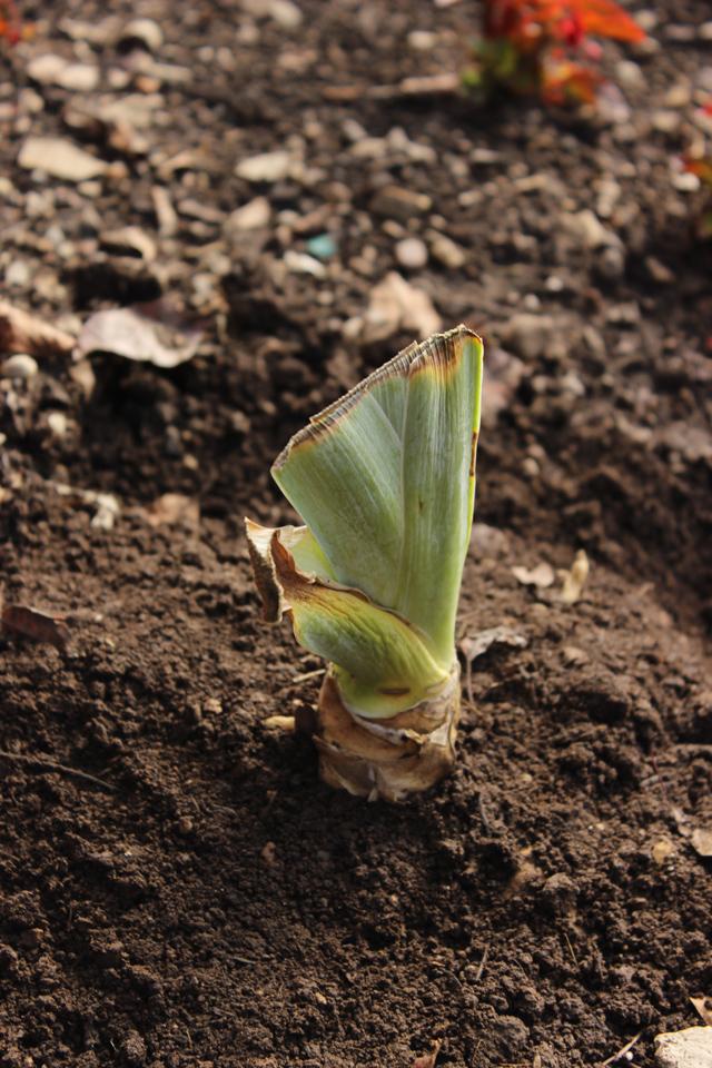 04---Final_Plantingblog
