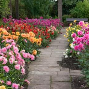 Bulb Bargain: Complete Summer Garden Kit