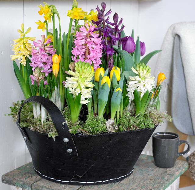 Container with Hyacinths