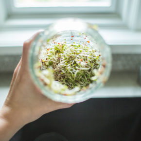 Organic Sprouts 101