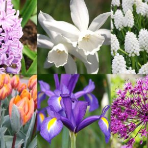Best Spring Blooms for Vases and Fragrance