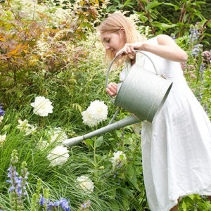 Woman Watering Dahlias