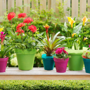 7 Bulbs to Grow in Containers This Summer