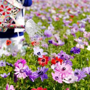 June Gardening FAQs