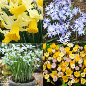 Early Spring Blooms Collection