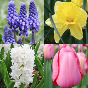Mid Spring Blooms Collection