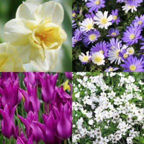 Start Planning for Spring Blooms Now!