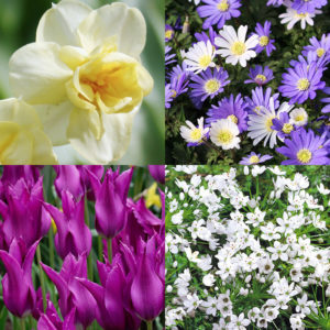 Late Spring Blooms Collection