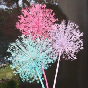 Spray Painting Allium Flowers