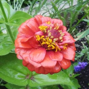 Seed Mat Flower