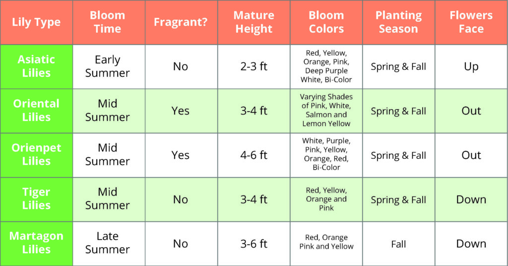 Differences Between Lilies Chart