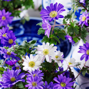 Top 12 True Blue Flowers to Plant this Fall
