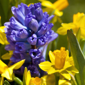 7 Deer Resistant Combinations for Spring Blooms