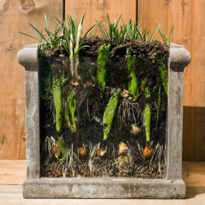 Lasagna Garden: Planting Flower Bulbs in Layers