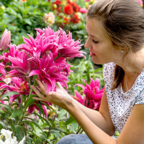 The Beginner's Guide to Gardening with Lilies