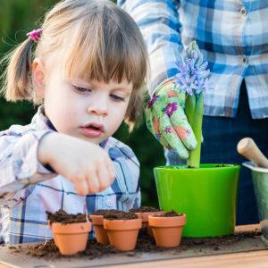 Planting Hyacinths