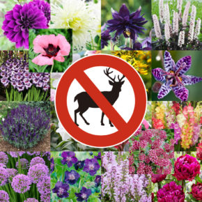 5 Deer Resistant Bulb and Perennial Planting Ideas