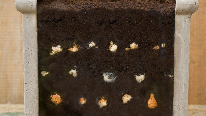 Lasagna Planting