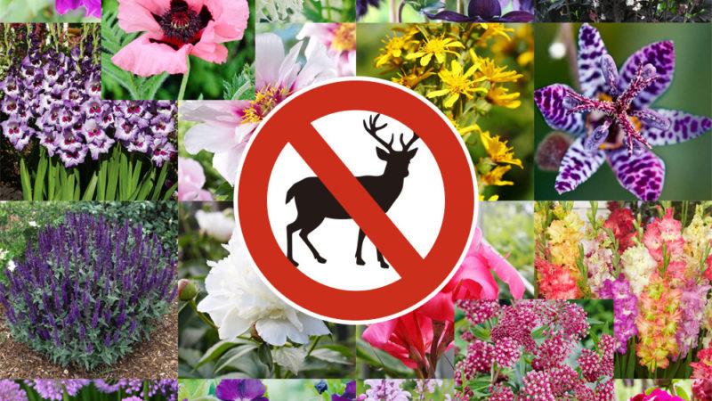 Deer Resistant Varieties