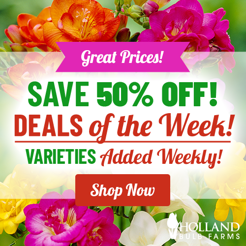 Save 50% OFF Deals of the Week!