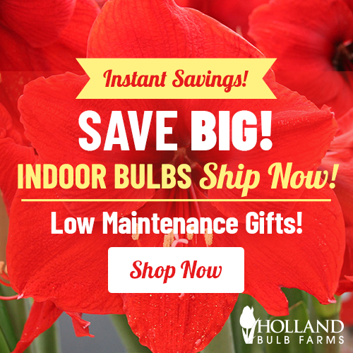 Save BIG on Indoor Bulbs!