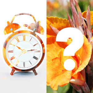 Clock and Cannas