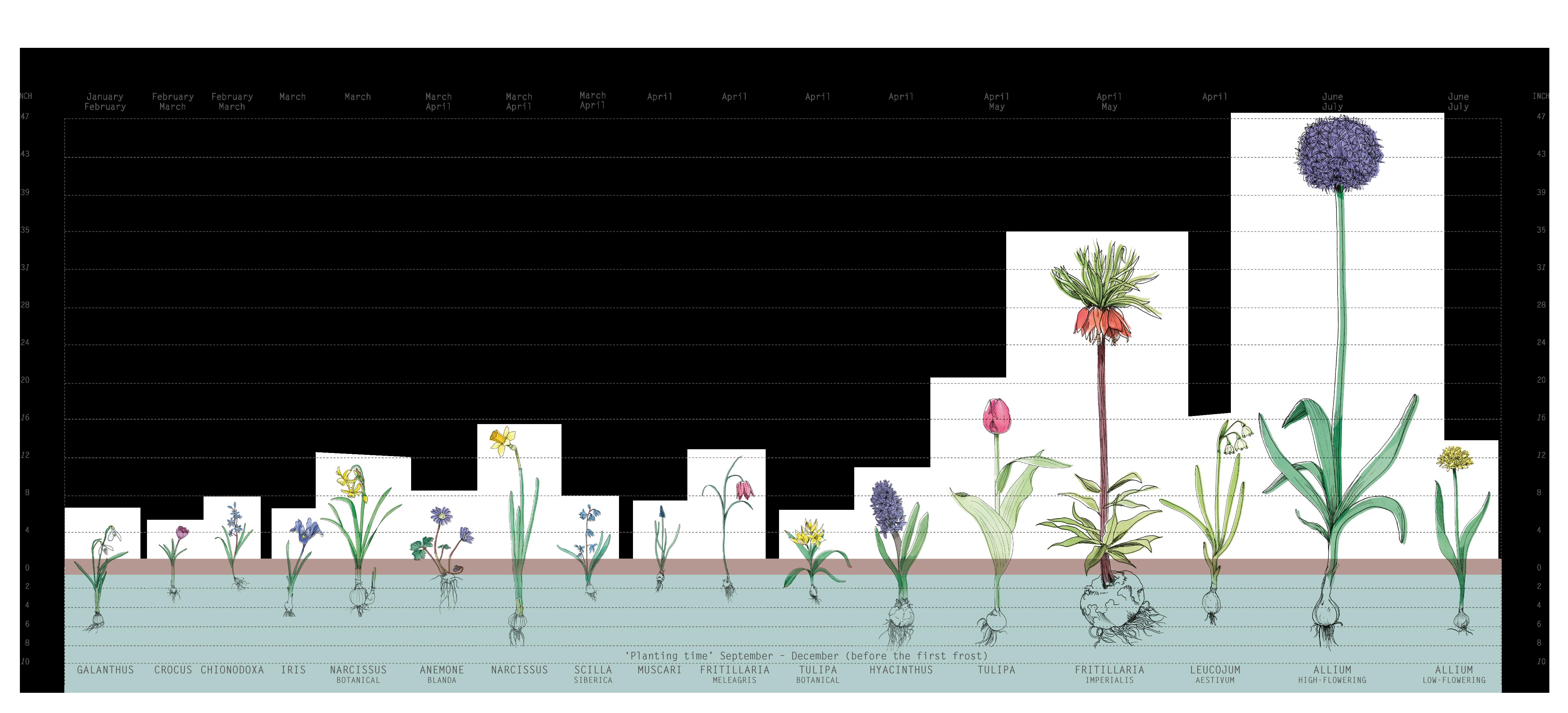 Fall Planting Chart