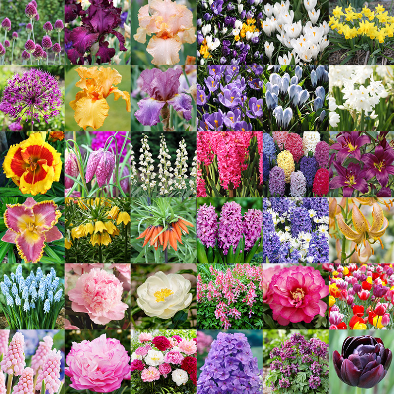 Planting Flower Bulbs In Fall When To Plant Bulbs For Spring Flowers