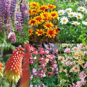 Perennial Flower Bonanza Collection
