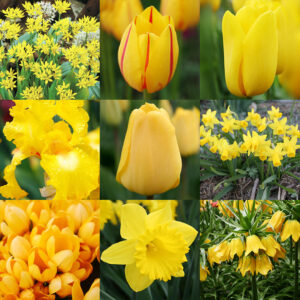 Bright and Sunny Yellow Collection